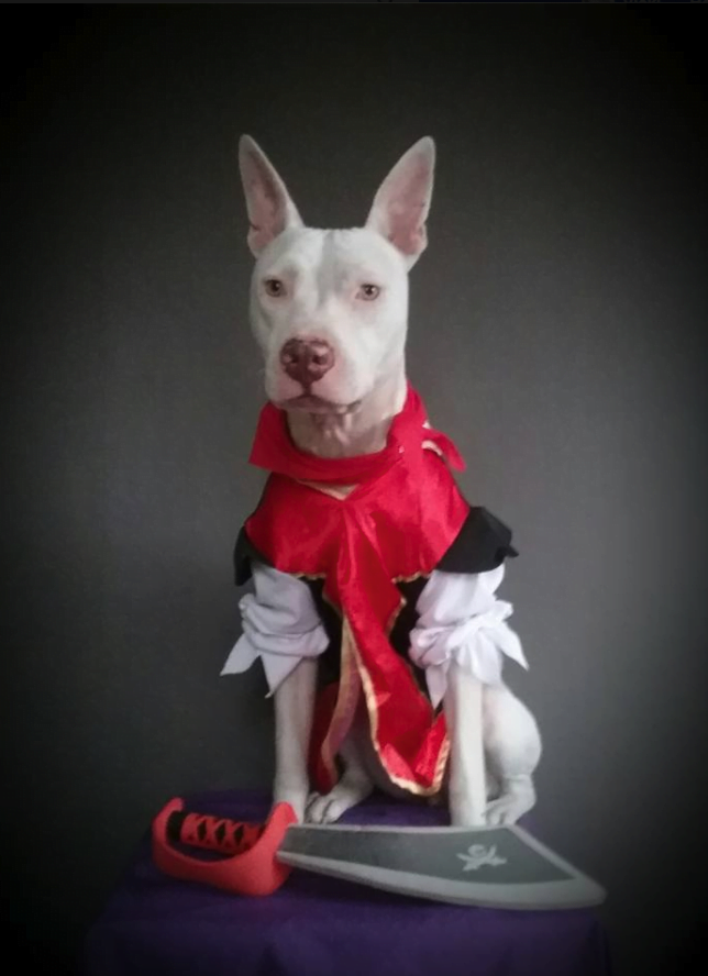 Adopt Deaf Dog Evie