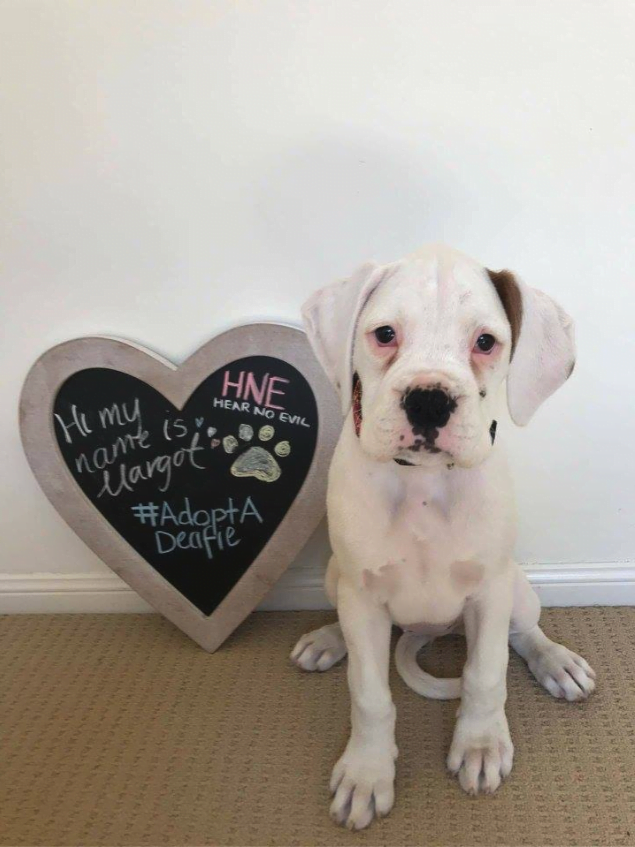 Adopt Deaf Dog Margot