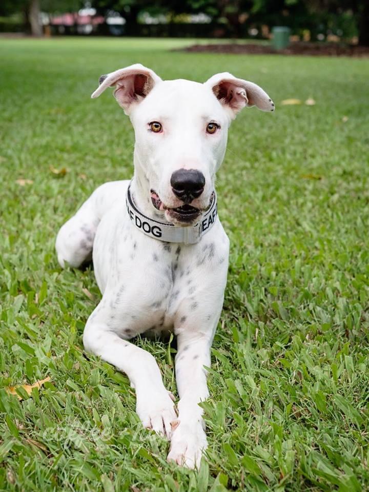 York Deaf Dog Rescue