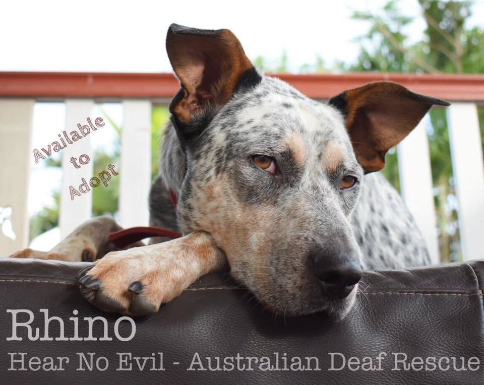 Rhino available for adoption
