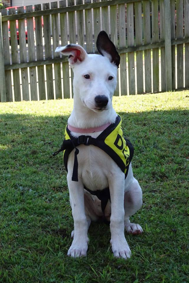 Kali Puppy Ready for Adoption