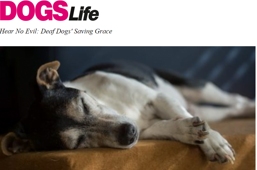 Dogs Life Interview