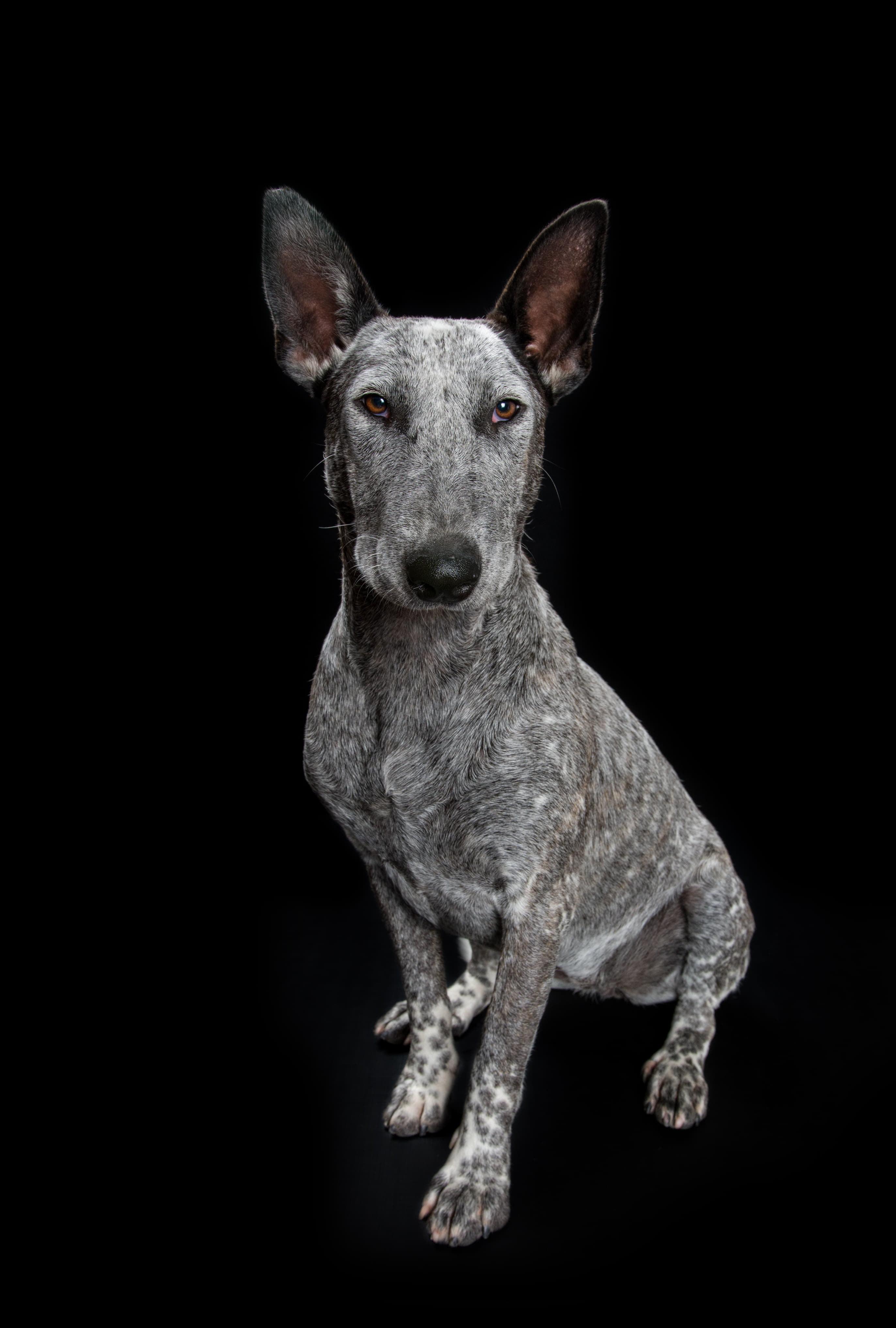 Feyre Adopt a deaf dog
