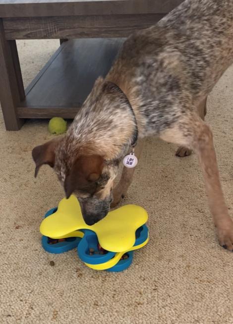 Canine Enrichment Lickimat